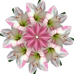 Flower Blossom Bloom Amaryllis Hook Handle Umbrellas (large)