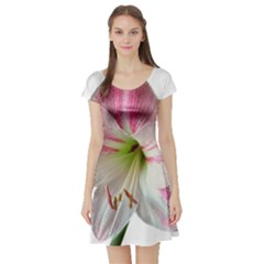 Flower Blossom Bloom Amaryllis Short Sleeve Skater Dress