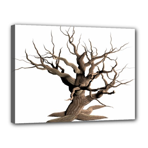 Tree Isolated Dead Plant Weathered Canvas 16  X 12