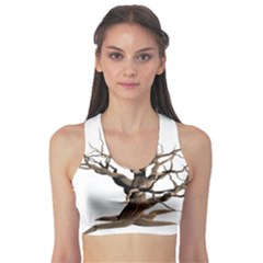Tree Isolated Dead Plant Weathered Sports Bra