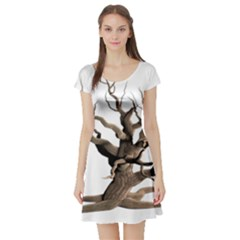 Tree Isolated Dead Plant Weathered Short Sleeve Skater Dress