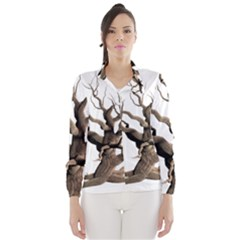 Tree Isolated Dead Plant Weathered Wind Breaker (women)