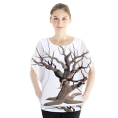 Tree Isolated Dead Plant Weathered Blouse
