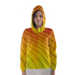 Abstract Pattern Lines Wave Hooded Wind Breaker (Women)