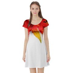 Abstract Autumn Background Bright Short Sleeve Skater Dress