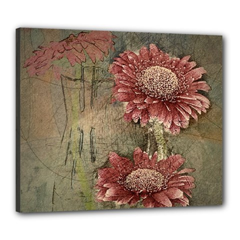 Flowers Plant Red Drawing Art Canvas 24  X 20