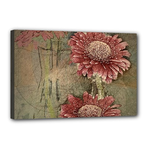 Flowers Plant Red Drawing Art Canvas 18  X 12