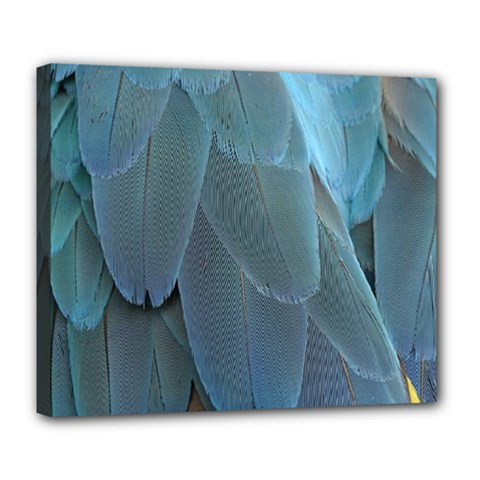 Feather Plumage Blue Parrot Deluxe Canvas 24  x 20