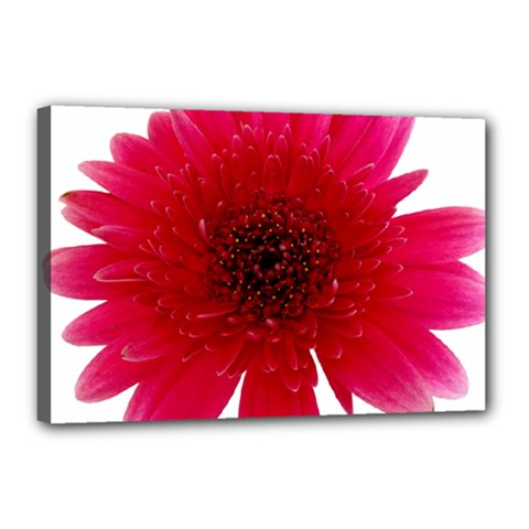 Flower Isolated Transparent Blossom Canvas 18  X 12