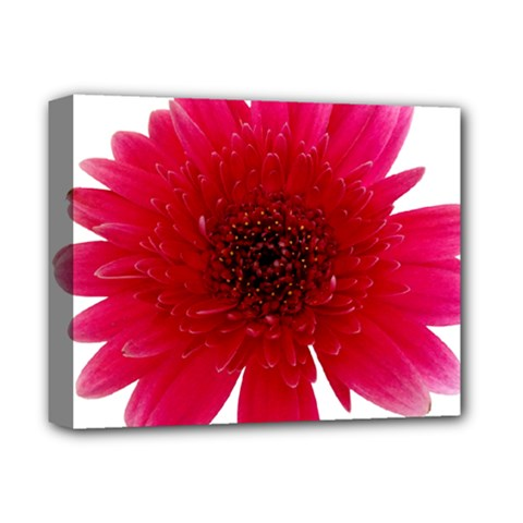 Flower Isolated Transparent Blossom Deluxe Canvas 14  X 11
