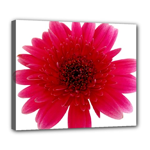 Flower Isolated Transparent Blossom Deluxe Canvas 24  X 20