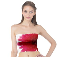 Flower Isolated Transparent Blossom Tube Top