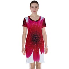 Flower Isolated Transparent Blossom Short Sleeve Nightdress