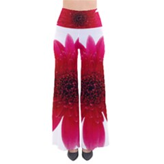 Flower Isolated Transparent Blossom Pants