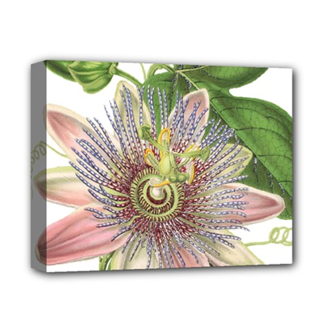 Passion Flower Flower Plant Blossom Deluxe Canvas 14  x 11