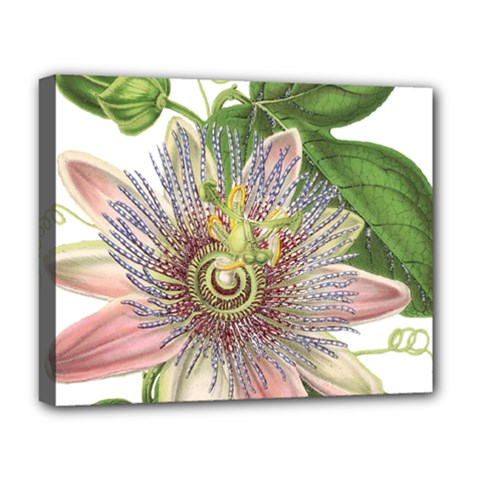 Passion Flower Flower Plant Blossom Deluxe Canvas 20  X 16