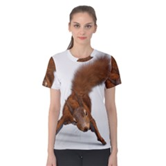Squirrel Wild Animal Animal World Women s Cotton Tee