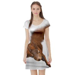 Squirrel Wild Animal Animal World Short Sleeve Skater Dress