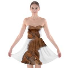Squirrel Wild Animal Animal World Strapless Bra Top Dress