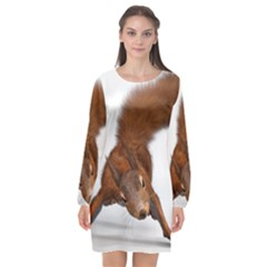 Squirrel Wild Animal Animal World Long Sleeve Chiffon Shift Dress
