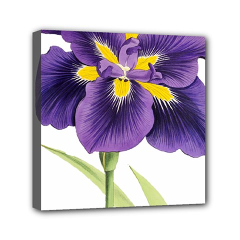 Lily Flower Plant Blossom Bloom Mini Canvas 6  x 6