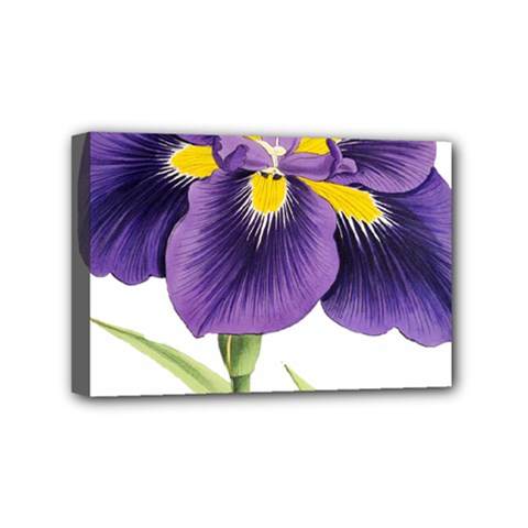Lily Flower Plant Blossom Bloom Mini Canvas 6  x 4