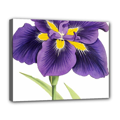 Lily Flower Plant Blossom Bloom Canvas 14  X 11