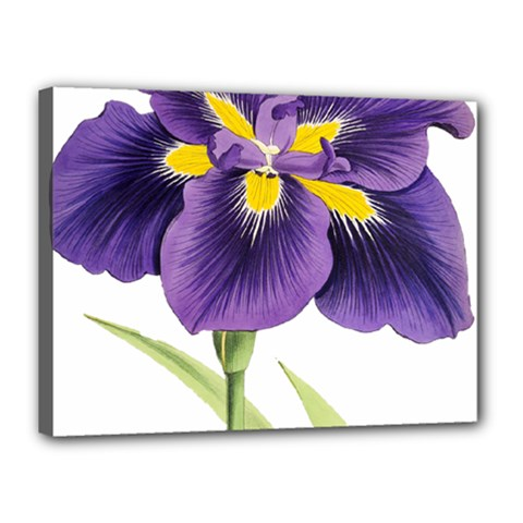 Lily Flower Plant Blossom Bloom Canvas 16  x 12
