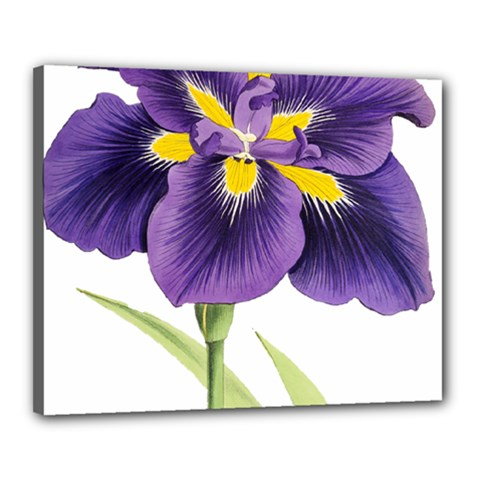 Lily Flower Plant Blossom Bloom Canvas 20  x 16