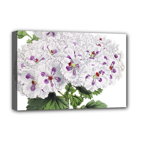 Flower Plant Blossom Bloom Vintage Deluxe Canvas 18  X 12