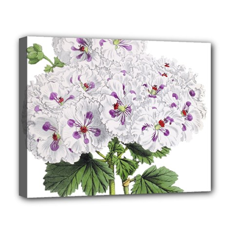 Flower Plant Blossom Bloom Vintage Deluxe Canvas 20  X 16