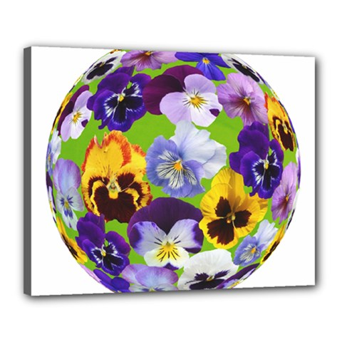Spring Pansy Blossom Bloom Plant Canvas 20  X 16
