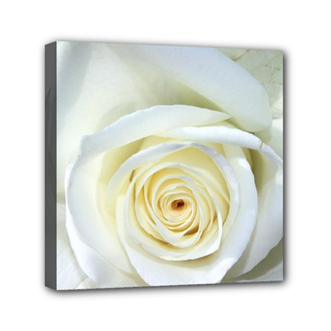 Flower White Rose Lying Mini Canvas 6  x 6