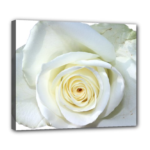 Flower White Rose Lying Deluxe Canvas 24  X 20