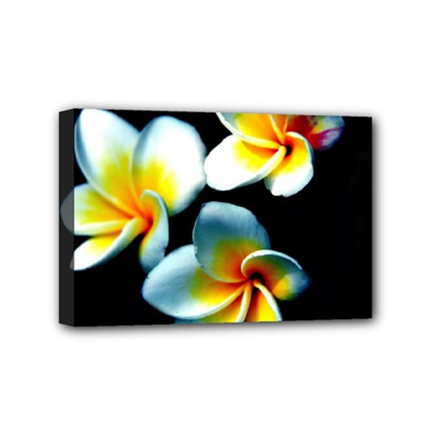 Flowers Black White Bunch Floral Mini Canvas 6  x 4