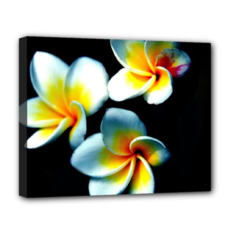 Flowers Black White Bunch Floral Deluxe Canvas 20  x 16