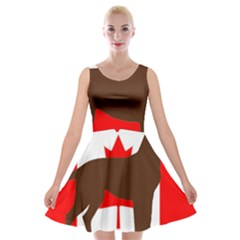 Chocolate Labrador Retriever Silo Canadian Flag Velvet Skater Dress