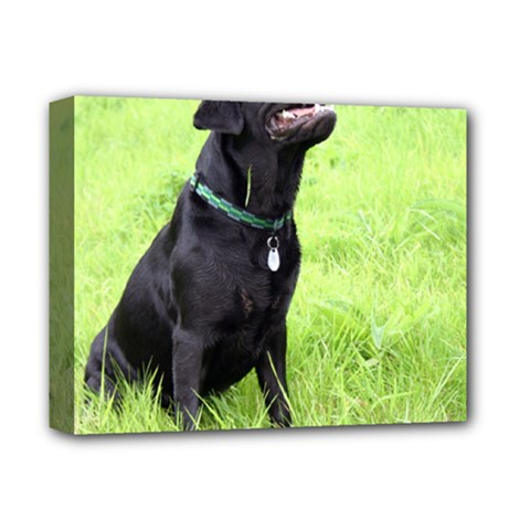 Lab Love W Pic Deluxe Canvas 14  x 11
