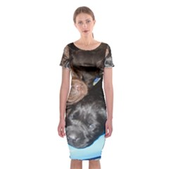 Litter Of Lab Pups Classic Short Sleeve Midi Dress