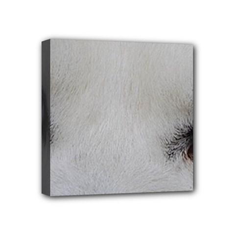 Akita Inu White Eyes Mini Canvas 4  x 4