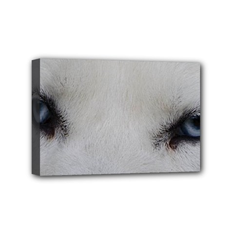 Akita Inu White Eyes Mini Canvas 6  x 4