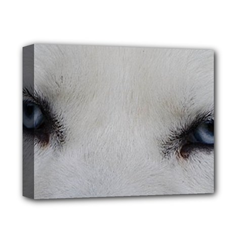 Akita Inu White Eyes Deluxe Canvas 14  x 11