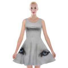 Akita Inu White Eyes Velvet Skater Dress