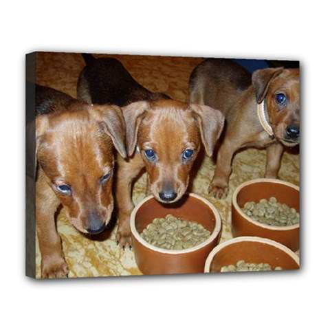German Pinscher Puppies Canvas 14  x 11