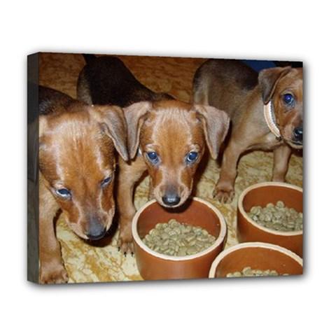 German Pinscher Puppies Deluxe Canvas 20  x 16