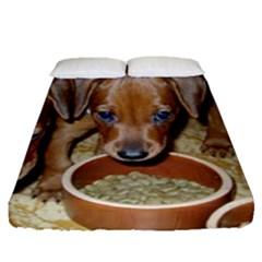German Pinscher Puppies Fitted Sheet (Queen Size)