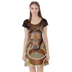 German Pinscher Puppies Short Sleeve Skater Dress