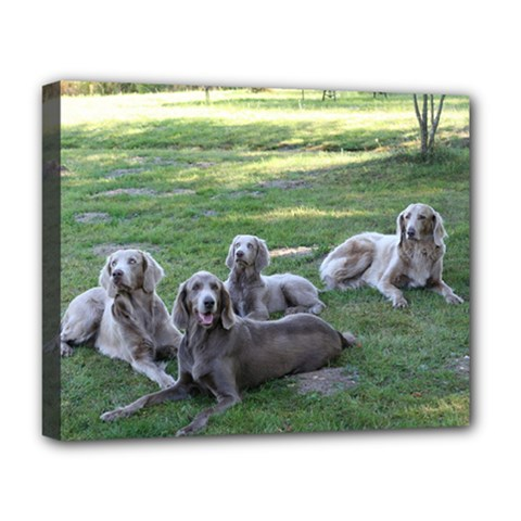 Longhair Weims Deluxe Canvas 20  x 16