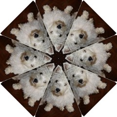 West highland white terrier puppy Golf Umbrellas