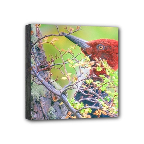 Woodpecker At Forest Pecking Tree, Patagonia, Argentina Mini Canvas 4  x 4